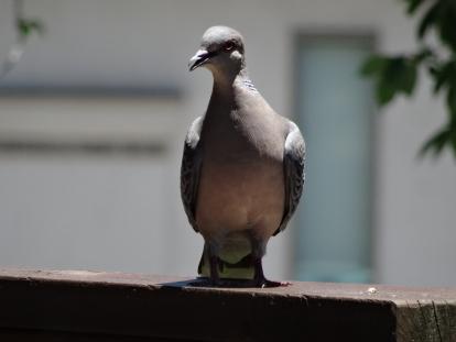 birdcafe 5.JPG