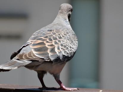 birdcafe 6.JPG