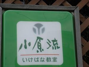 shino.jpg