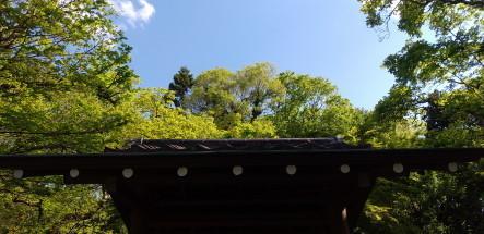 shinryoku3.JPG